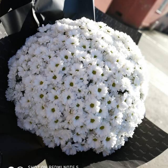"""Букет """"Хризантема», белая, 50 шт"""